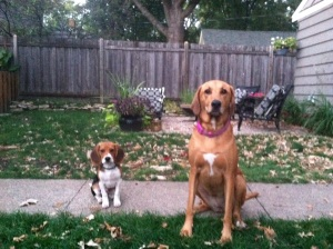 My dogs, incluidng my Beagle Elijah