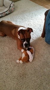 Bow with his baby (also a boxer).