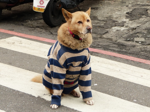 Dog_wearing_Cloth_Sitting_on_Road_20131227