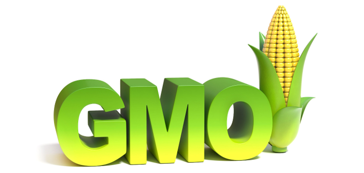 Genetically modified organisms are they safe